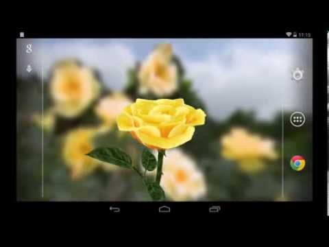 Video of 3D Rose Live Wallpaper