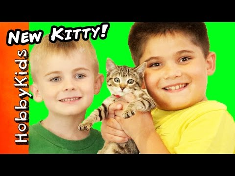 HobbyKids Get A NEW Kitty Cat! What Should We Namer Her?