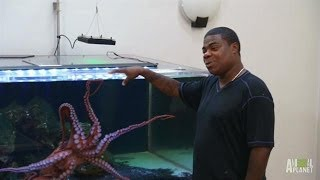 Tracy Morgan's Octopus Needs a Tank | Tanked
