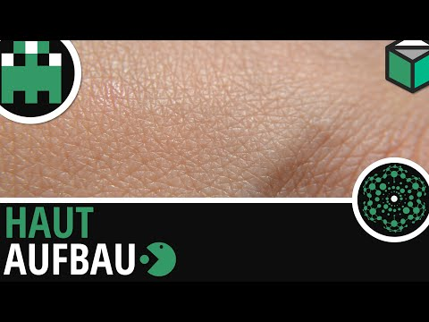 Haut-Aufbau-Humanbiologie-Biologie-Lernvideo (видео)