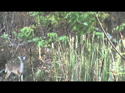 Doe Management at Whitetail Crossing