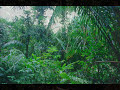 Jurassic Park Jungle ambience sounds