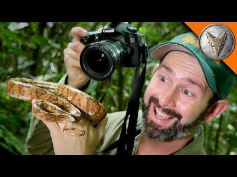 Tree Boa Photoshoot!