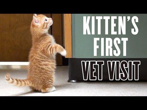 la-prima-visita-dal-veterinario