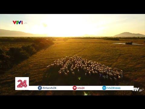 Trải nghiệm du lịch đồng cừu ở Ninh Thuận @ vcloz.com