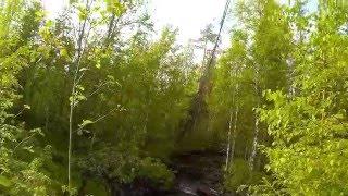 Карелия. лесные дороги.красивая речка.