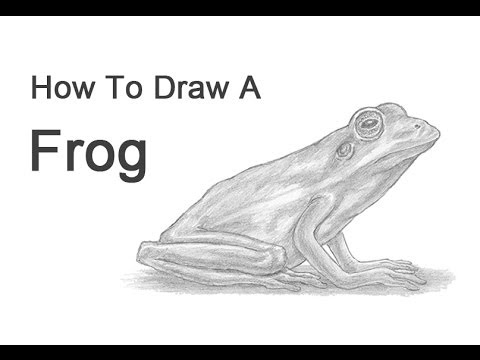 How to Draw a Frog (American Green Tree Frog)