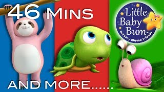 Download LBB videos  https://bamazoo.com/littlebabybumPlush Toys: http://littlebabybum.com/shop/plush-toys/© El Bebe Productions Limited00:04 Things That Go Slow01:42 DAISY04:00 Five Little Kittens Jumping On The Bed05:38 Number 7 Song07:10 Happy Birthday Song - Part 208:37 Hopping Song10:14 Big & Small12:00 Hot Cross Buns13:17 Sharing Song15:02 Apple Song16:34 Number 5 Song18:09 Animal Fair19:41 Ice Cream Song21:04 Six Little Ducks22:58 Telling Time Song24:37 The Muffin Man26:11 Diddle Diddle Dumpling, My Son John27:52 Ten Little Fingers29:15 Roses Are Red31:02 Solomon Grundy32:42 Aiken Drum34:17 This Little Piggy35:57 Ten Little Buses38:12 Mary Mary Quite Contrary39:57 Boing Boing Bounce Bounce41:29 Counting Fish43:03 Triangle Song44:39 Simple Simon