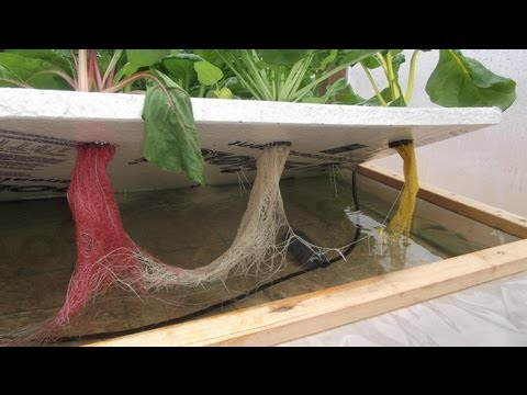 Off-Grid Hydroponics Experiment - The Kratky Method & Floating Raft Hydroponics