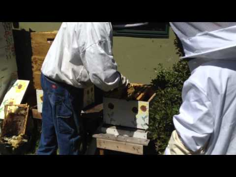 Combining two beehives