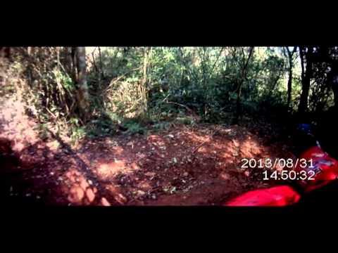 Trilha em Matelandia  Abelhas da trilha