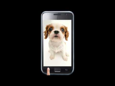 Video of Dog sniffs screen wallpaper