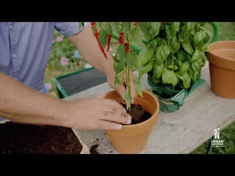 Wurmkompostierung - Wie verwende ich Kompost?