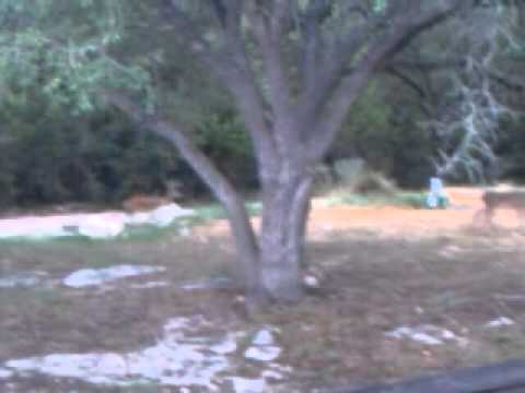Chihuahua chases deer in texas
