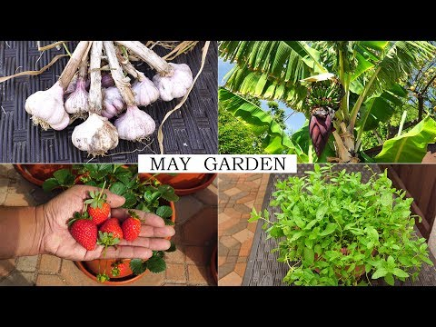 The May Garden - Summer Harvests, Gardening Tips & More