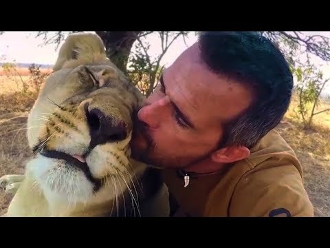 How Lions Say Hello | The Lion Whisperer (видео)