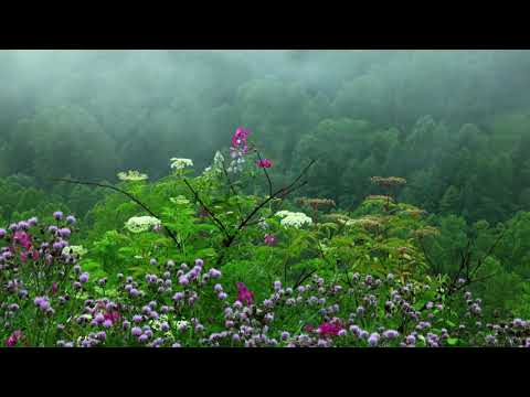 Rain Sounds with Tibetan Singing Bowls and Birds chirping  Sleep Music - Thời lượng: 10 giờ.