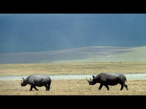 Ngorongoro Crater, Tanzania in HD