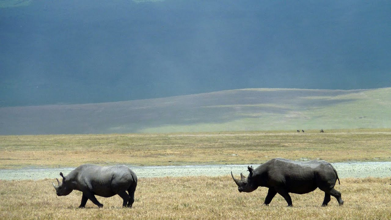 Ngorongoro crater-Tanzania. (Video courtesy of The world of travel)