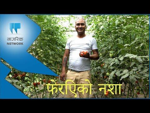 (फेरिएको नशा ।। A Changed Addiction।। राजेश दिदियाको कथा ।। Nagarik Network - Duration: 4 minutes, 43 seconds.)