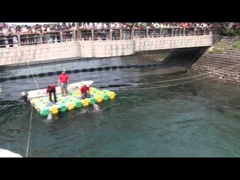 【鹿児島県】水路で観られるイルカたちの曲芸に大興奮!