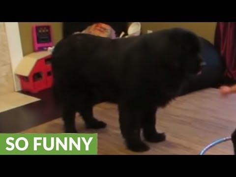Speel Kindje probeert hond te leren hoelahoepen af