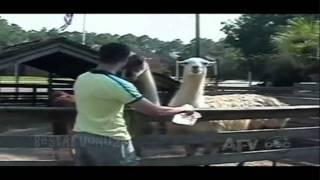 ☺ AFV Part 95 (NEW!) America's Funniest Home Videos 2011 | OrangeCabinet