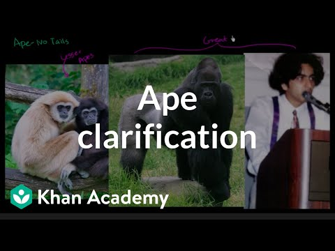 Abklärungen über Affen