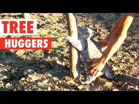 Funny animals - Tree Huggers  Funny Pet Compilation 2018