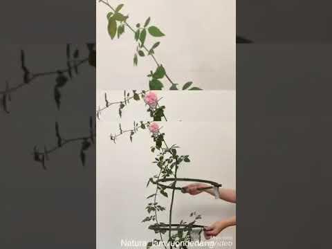 #8 KHUNG HOA HÌNH TRÒN đỡ hoa hồng, #giá_đỡ_hoa_hồng