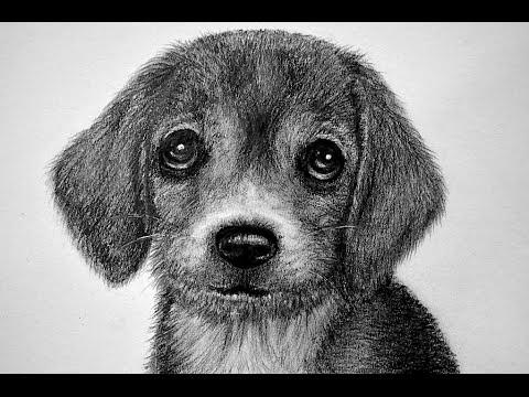 CÓMO DIBUJAR UN PERRO - PELAJE DE ANIMAL/HOW TO DRAW A DOG
