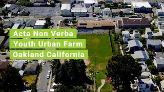 Acta Non Verba Youth Urban Farm Project