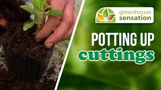 Potting Up Cuttings
