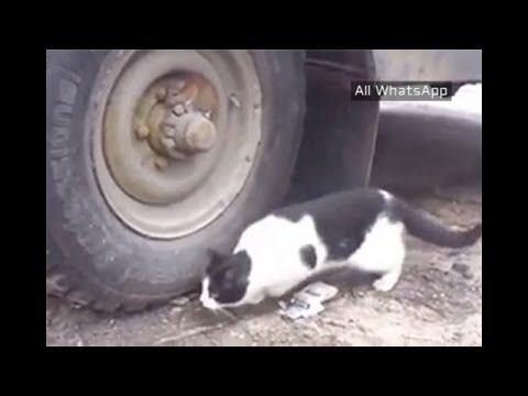 Cat Cannot Find Hidden Mouse In Tire | Whatsapp Funny Videos 2015 2016 @whatsapp #whatsapp