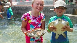 Grand Cayman Turtle Experience - Holding & Swimming with Turtles!!