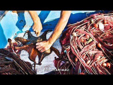 La pesca dei polpi - un'indagine di Essere Animali