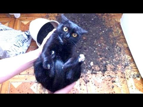 Search Result Youtube Video Funnycat - Cats who tried so hard but failed in the most hilarious ways