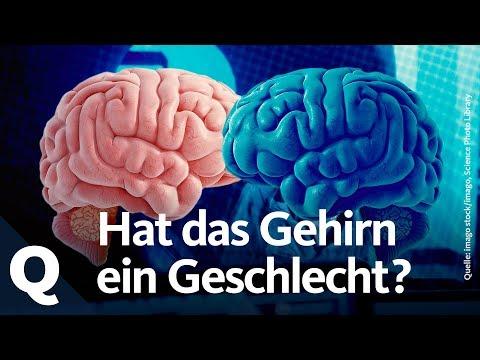 Ist das Gehirn weiblich, männlich oder etwas anderes?