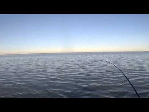 Kayak Fishing: Sight Casting Tailing Redfish