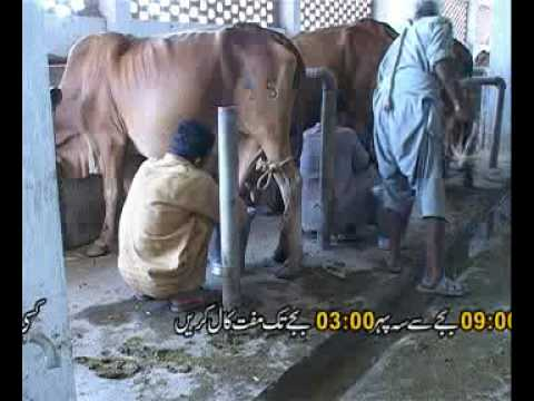 Sahibzada - A documentary for Dairy farmers, extension workers ,researchers and students. Currently Helpline # is 080070714 and Dr. Sahibzada's Cell# 03335121879.