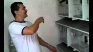 Criadouro Rio de Janeiro Curio Goianinho parte 2