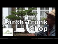Download Lagu Old Bonsai Larch has its day trunk chop & hair cut Mp3 Free