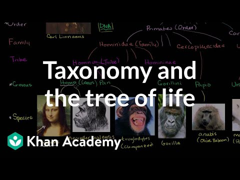 Biology: Tree of life