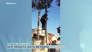 Guarda Civil resgata gato de árvore em Salto de Pirapora