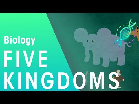 The 5 Kingdoms in Classification | Evolution | Biology | FuseSchool