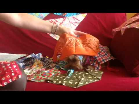 Bandanas pour chien
