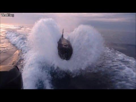 Wale jagen Motorboot