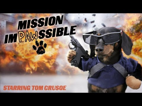 Ep 12: MISSION IMPAWSSIBLE (Finale) - Funny Dog Video