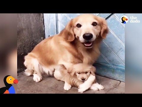 un-papa-cane-molto-protettivo