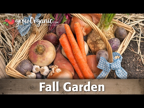 Growing a Fall Garden